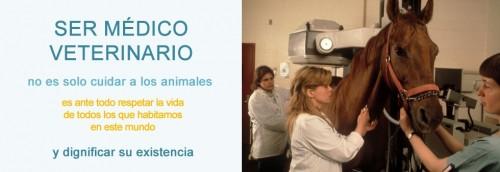 Que día se celebra su día los veterinarios – imágenes y Frases del Dia del Veterinario
