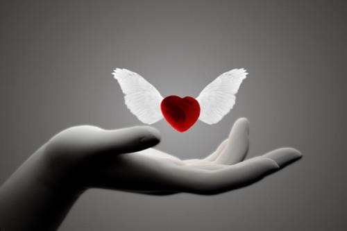 Día de la Donación de Organos - mensajes  (6)