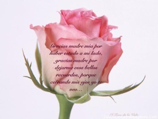Felíz Día de las Madres (9)