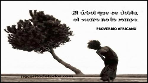 Dia del Arbol frases  (7)