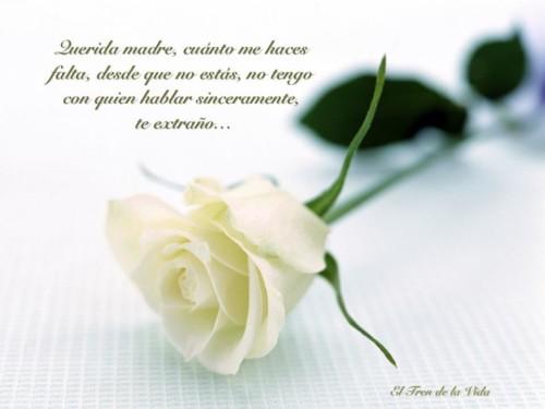 Felíz día de la Madre - frases  (15)