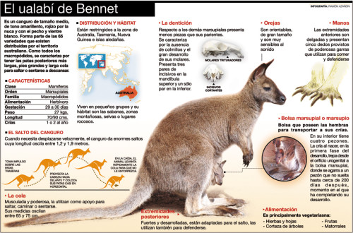 Infografias Día del Animal  (18)