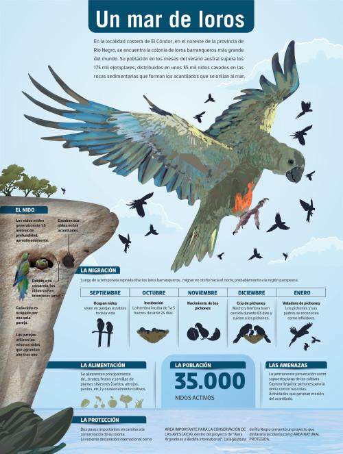Infografias Día del Animal  (20)