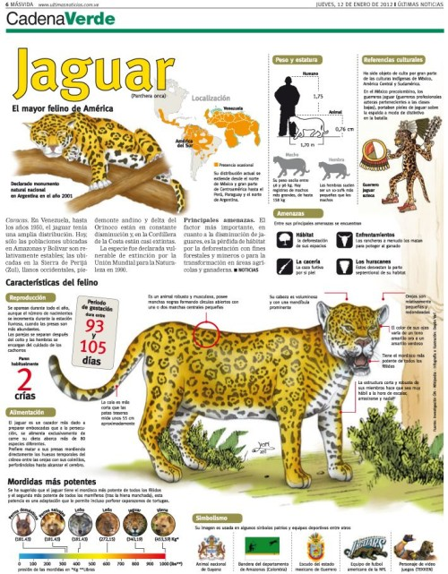 Infografias Día del Animal  (23)