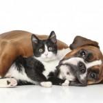 29 de Abril – Día del Animal – imágenes y frases para compartir