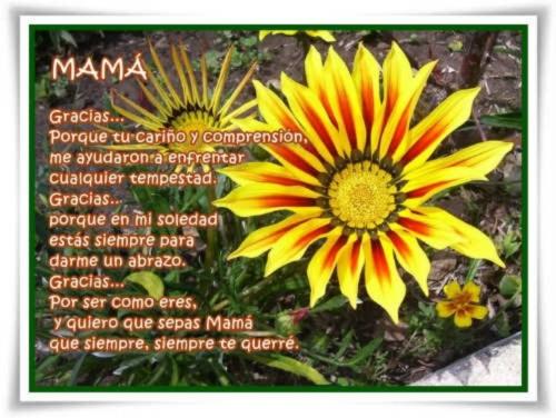 Felíz día de la Madre - frases (12)