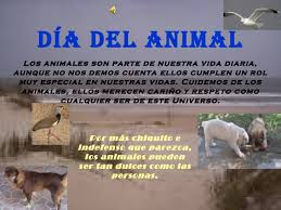 imagenes-dia-del-animal (24)