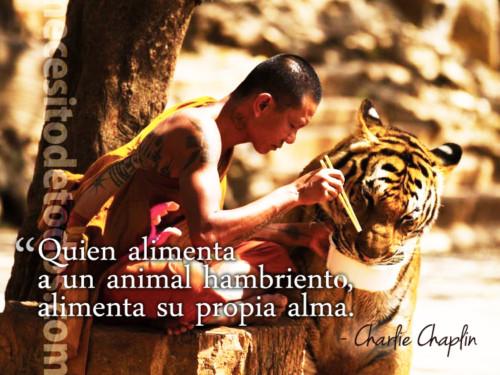 imagenes-dia-del-animal (9)