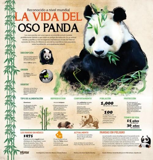 Día del Animal   (11)