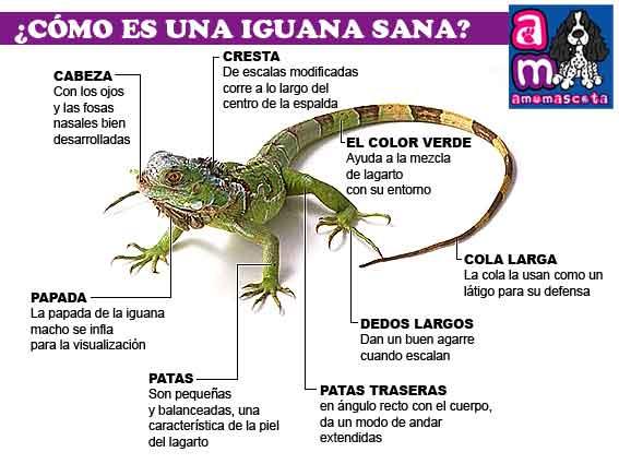 Día del Animal   (7)