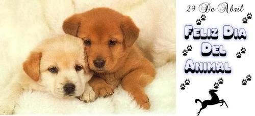 Feliz Día del Animal  (4)