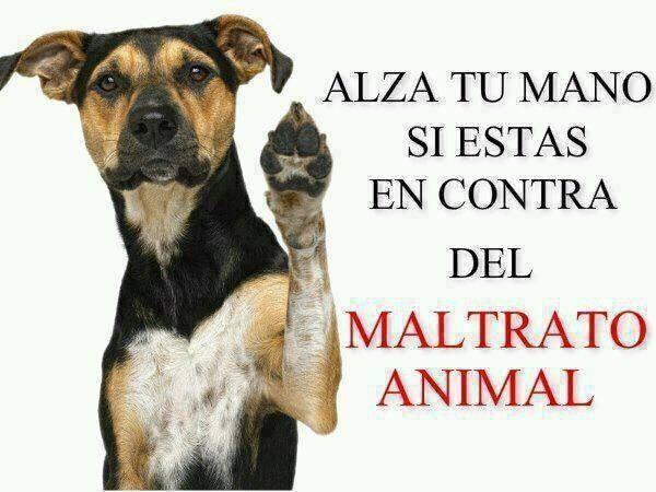 Feliz Día del Animal  (5)