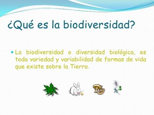 Día de la Biodiversidad (11)