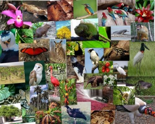 Día de la Biodiversidad (2)