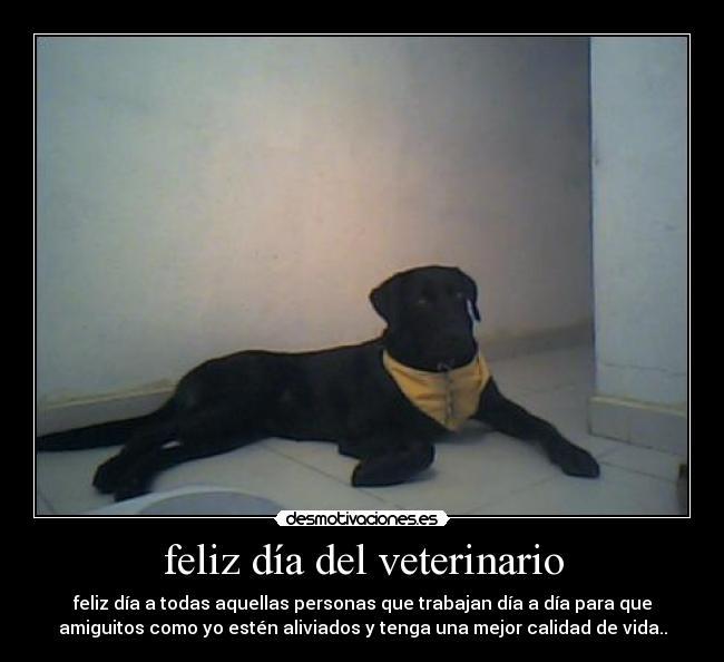 dia del veterinario frases imagenes  (10)