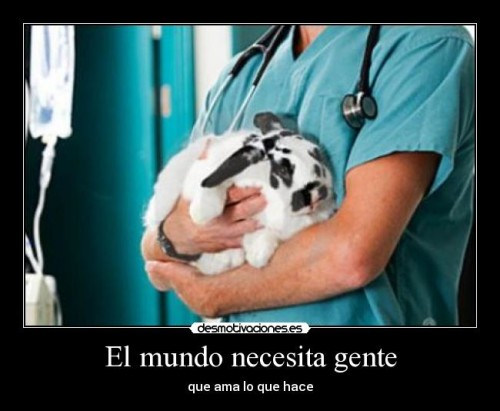 dia del veterinario frases imagenes  (11)