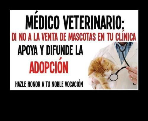 dia del veterinario frases imagenes  (6)