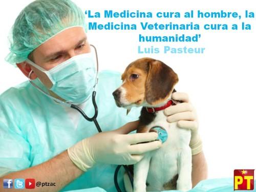 dia del veterinario frases imagenes  (8)